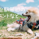 ★仙台駅から仙台空港までワンコインで行けるみたい!(期間限定)